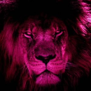 african-lion-2888519_640-20-07-33